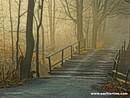 Wooden Bridge in the Mist